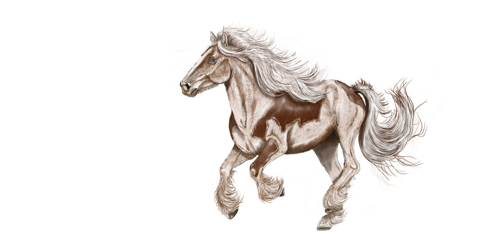 Horse Stickers - 2018 messages sticker-9
