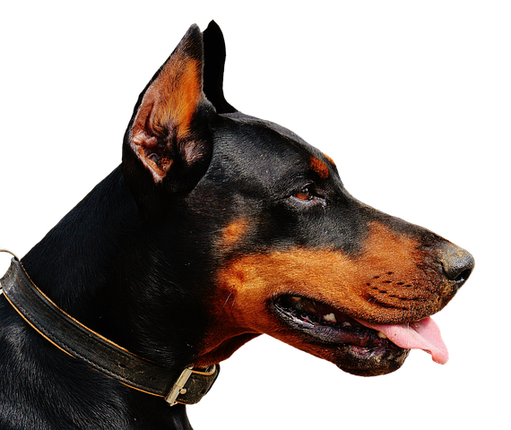 Realistic Dog Stickers messages sticker-3