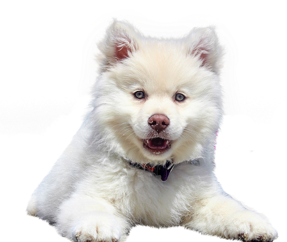 Realistic Dog Stickers messages sticker-6