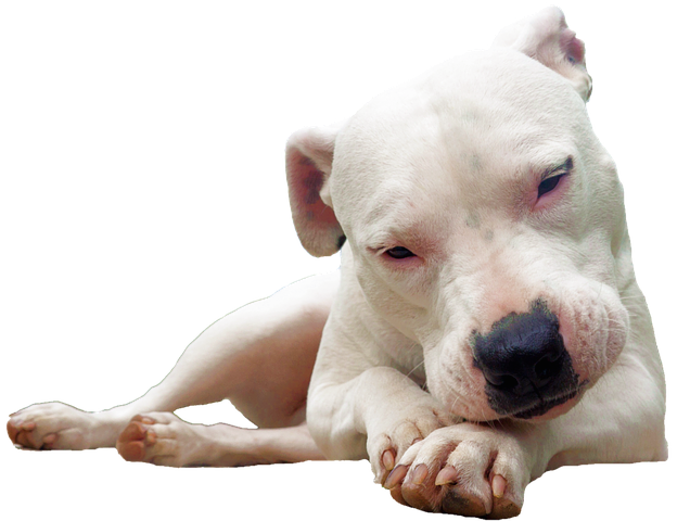 Realistic Dog Stickers messages sticker-0