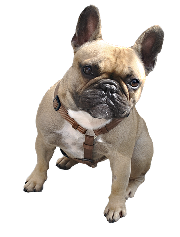 Realistic Dog Stickers messages sticker-1