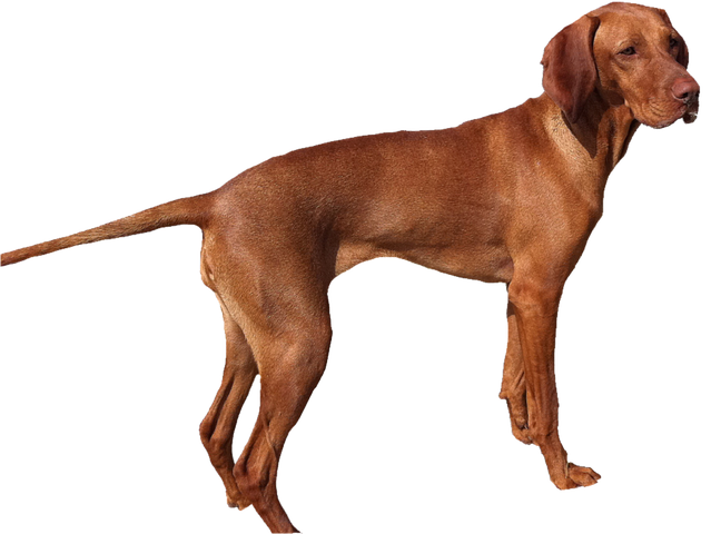 Realistic Dog Stickers messages sticker-2