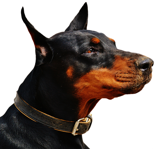 Realistic Dog Stickers messages sticker-8