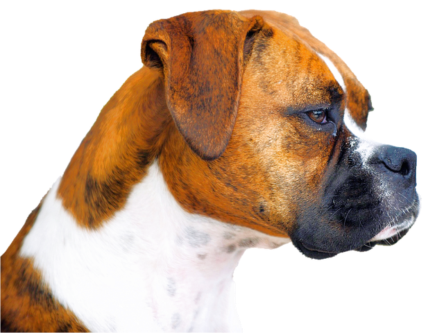 Realistic Dog Stickers messages sticker-10