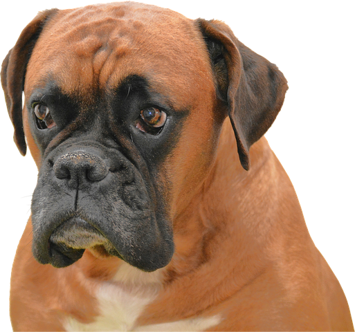 Realistic Dog Stickers messages sticker-9