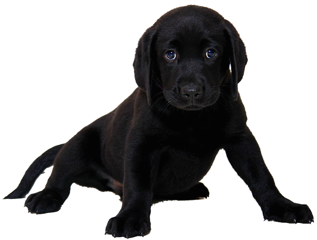Realistic Dog Stickers messages sticker-5