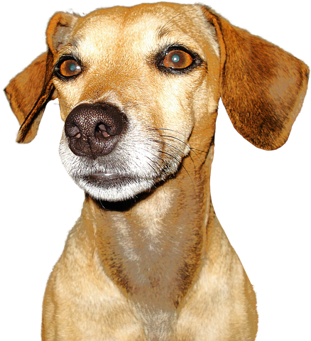 Realistic Dog Stickers messages sticker-7