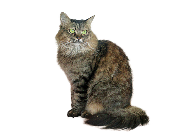 Realistic Cat Stickers messages sticker-9