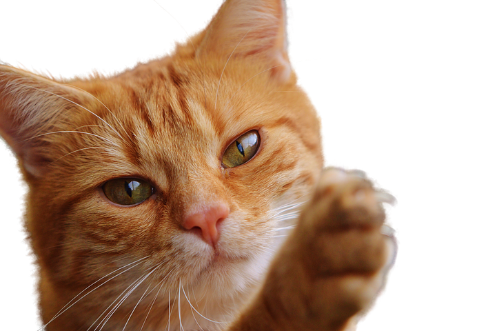 Realistic Cat Stickers messages sticker-1