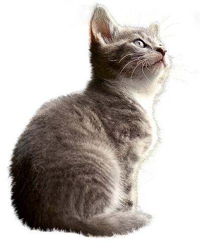 Realistic Cat Stickers messages sticker-8