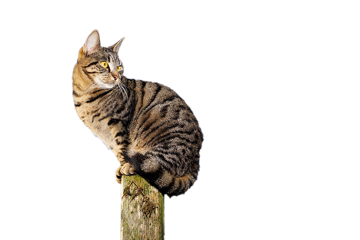 Realistic Cat Stickers messages sticker-3