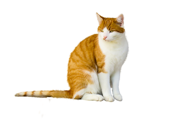 Realistic Cat Stickers messages sticker-0