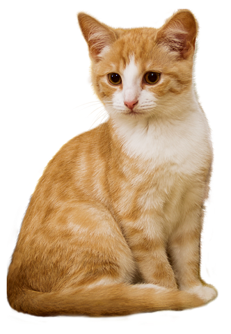 Realistic Cat Stickers messages sticker-5