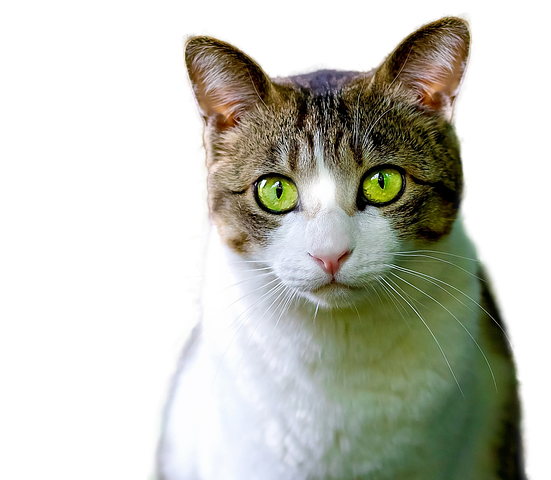 Realistic Cat Stickers messages sticker-2