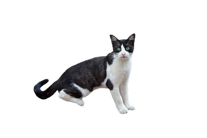 Realistic Cat Stickers messages sticker-11