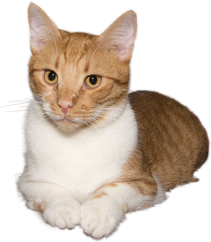 Realistic Cat Stickers messages sticker-4