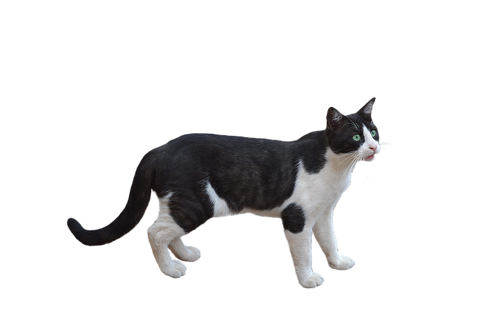 Realistic Cat Stickers messages sticker-10