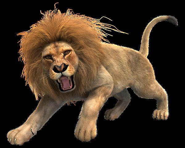 Lion Stickers - 2018 messages sticker-1
