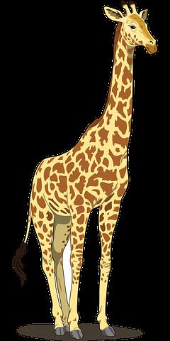 Giraffe Stickers - 2018 messages sticker-3