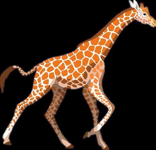 Giraffe Stickers - 2018 messages sticker-4