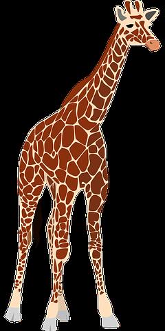 Giraffe Stickers - 2018 messages sticker-1