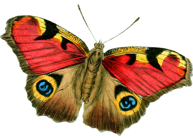 Butterfly Stickers - 2018 messages sticker-7