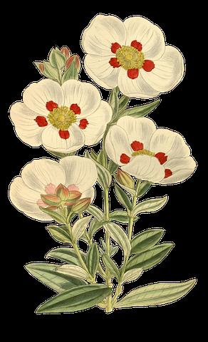 Flower Stickers - 2018 messages sticker-4