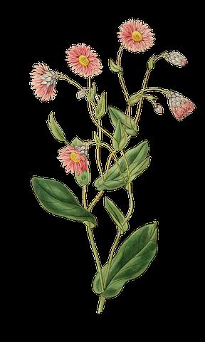 Flower Stickers - 2018 messages sticker-3