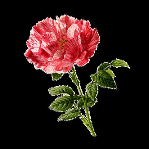 Flower Stickers - 2018 messages sticker-10