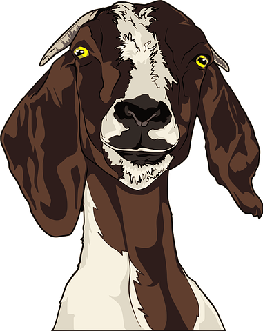 Goat Stickers - Sid Y messages sticker-9