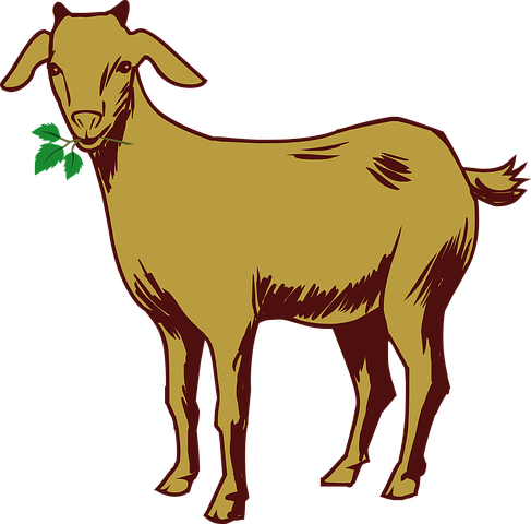 Goat Stickers - Sid Y messages sticker-6