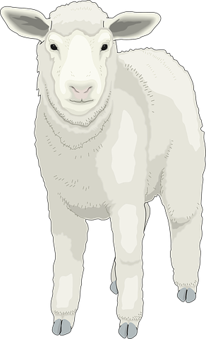 Sheep Stickers - 2018 messages sticker-7