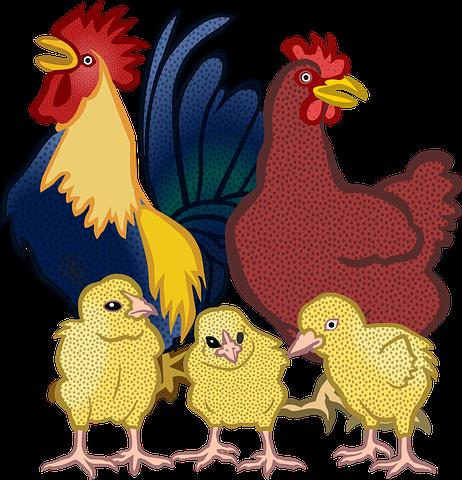 Chicken N Turkey Stickers messages sticker-11