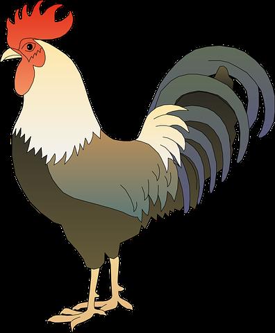 Chicken N Turkey Stickers messages sticker-6
