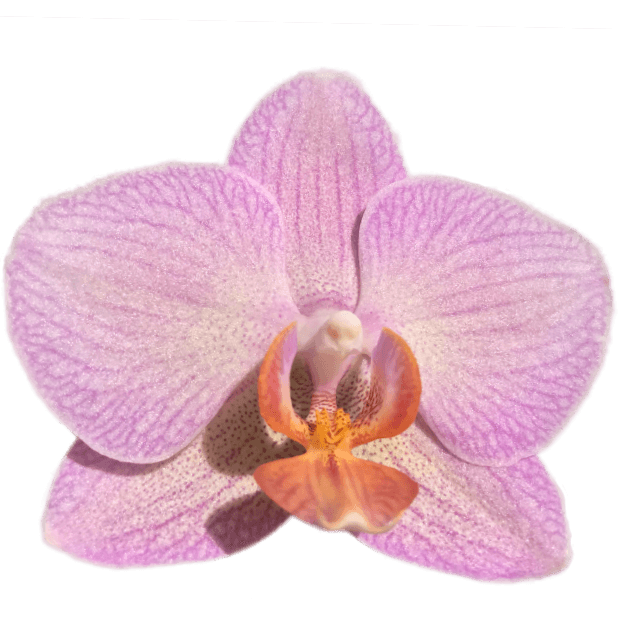 Real Orchids messages sticker-5