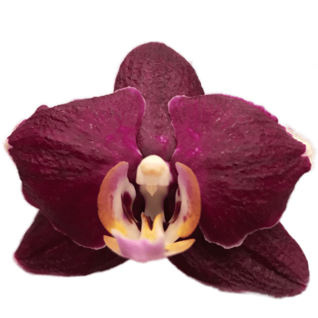 Real Orchids messages sticker-6