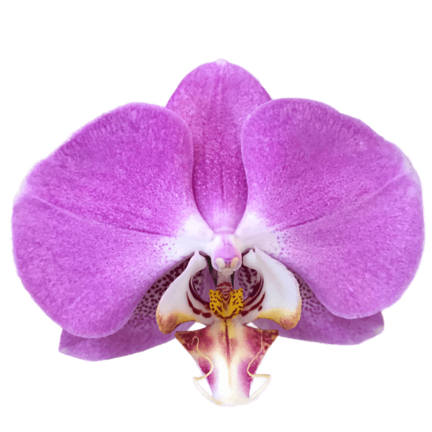 Real Orchids messages sticker-7