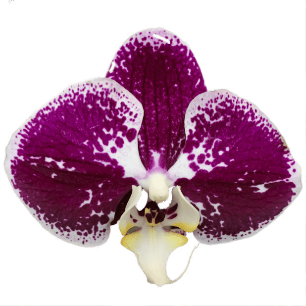 Real Orchids messages sticker-8