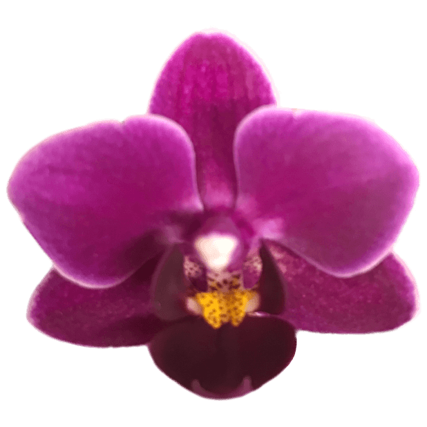 Real Orchids messages sticker-9
