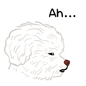Yallet the bichon (taster) messages sticker-0