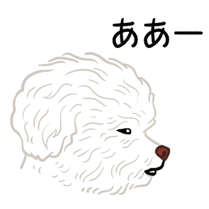 Yallet the bichon (taster) messages sticker-3