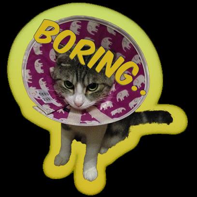Cat Bros. Sticker Lite messages sticker-8