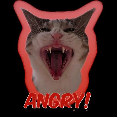 Cat Bros. Sticker Lite messages sticker-1