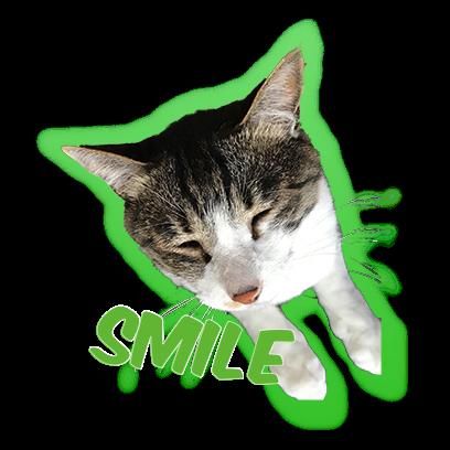 Cat Bros. Sticker Lite messages sticker-4