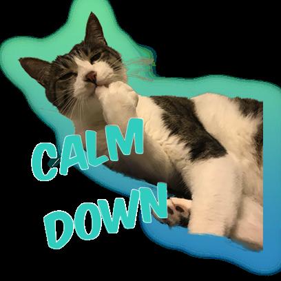 Cat Bros. Sticker Lite messages sticker-5