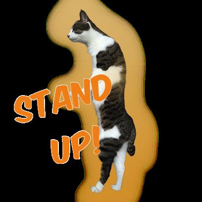 Cat Bros. Sticker Lite messages sticker-9