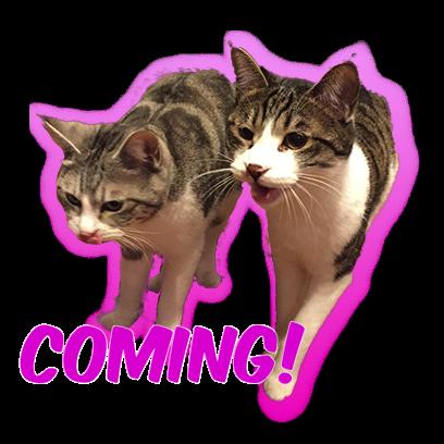 Cat Bros. Sticker Lite messages sticker-3
