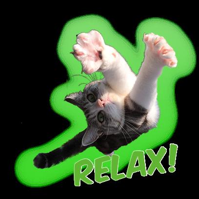 Cat Bros. Sticker Lite messages sticker-10