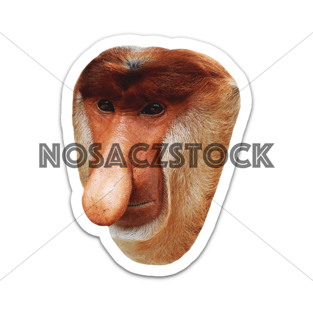 Nosaczmoji Biedra Edyszyn messages sticker-0