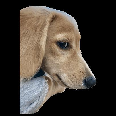 Cleo Daily Sticker Puppy Era messages sticker-2